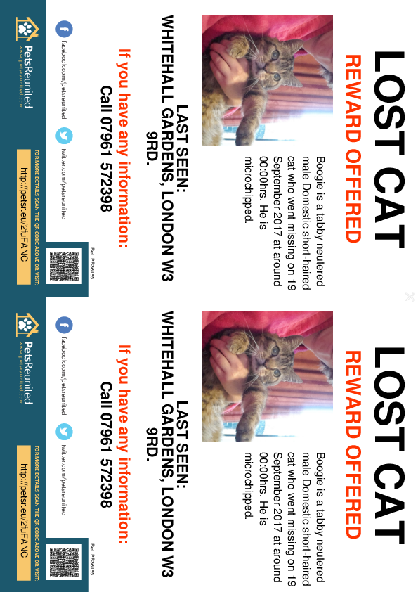 Lost pet flyers - Lost cat: Tabby cat called Boogie