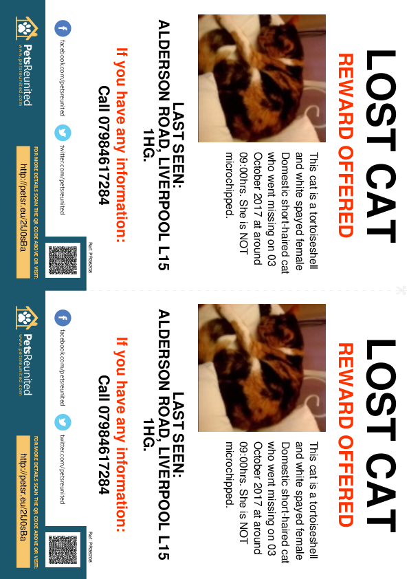 Lost pet flyers - Lost cat: Tortoiseshell and white cat [name witheld]