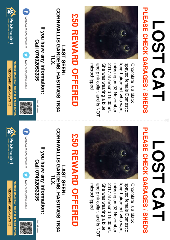 Lost pet flyers - Lost cat: Black cat called Chocolate
