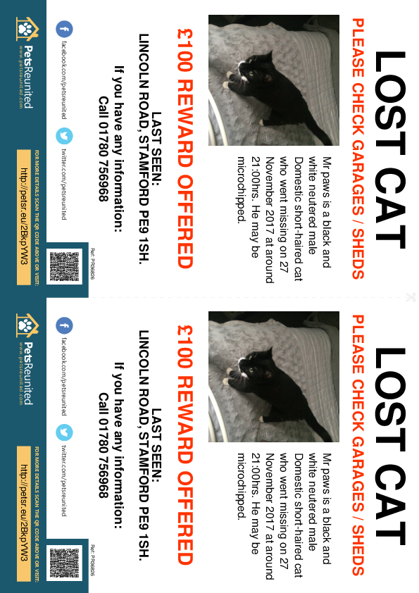 Lost pet flyers - Lost cat: Black and white cat called Mr paws
