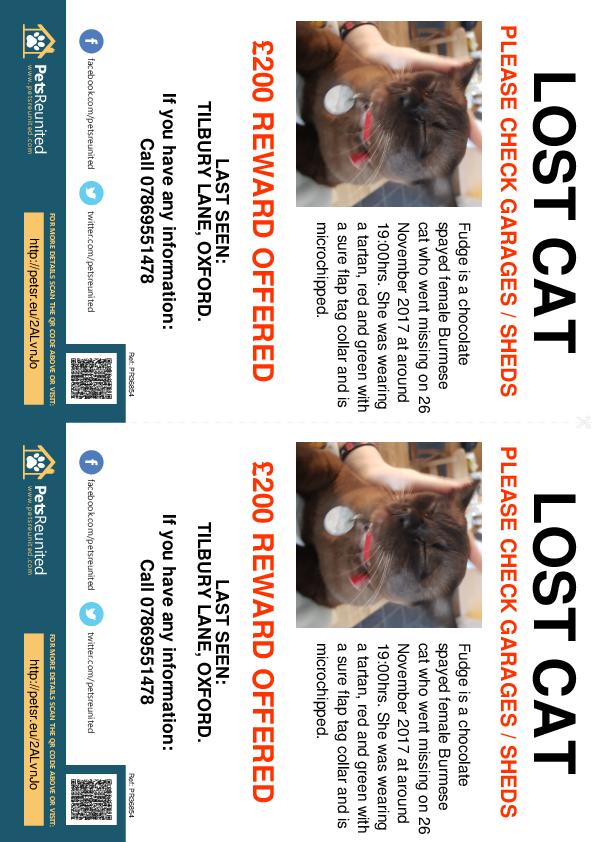 Lost pet flyers - Lost cat: Chocolate Burmese cat called Fudge