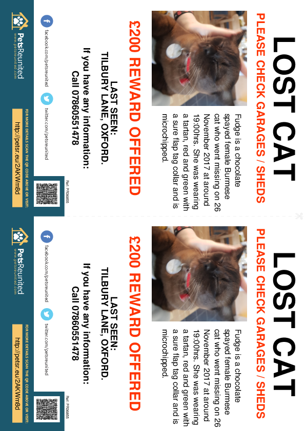 Lost pet flyers - Lost cat: Chocolate Burmese cat called Fudge
