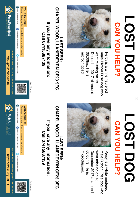 Lost pet flyers - Lost dog: White Bichon Frise dog called Percy