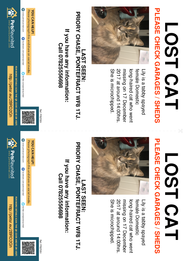 Lost pet flyers - Lost cat: Tabby cat called Lily