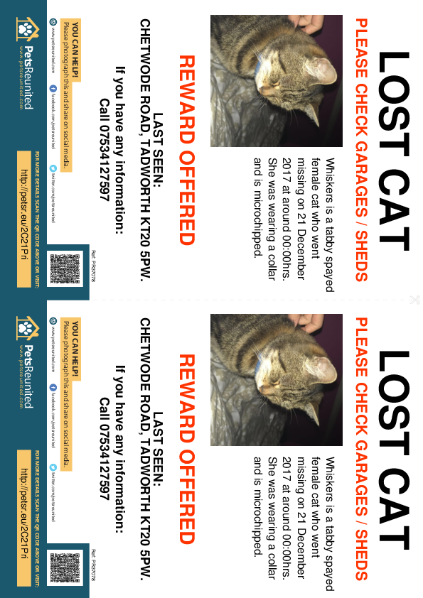 Lost pet flyers - Lost cat: Tabby cat called Whiskers
