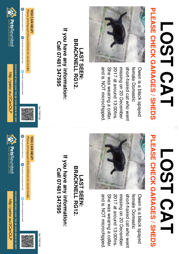 Lost pet flyers - Lost cat: Black cat called Owen