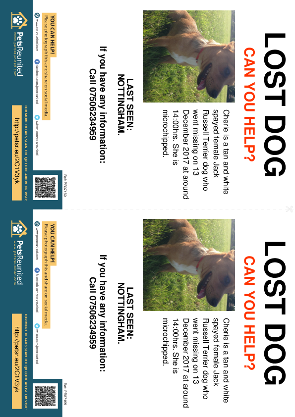Lost pet flyers - Lost dog: Tan and White Jack Russell Terrier dog called Cherie