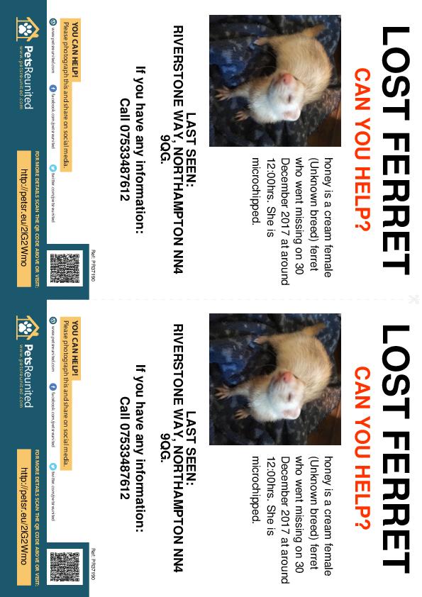 Lost pet flyers - Lost ferret: cream  ferret called honey