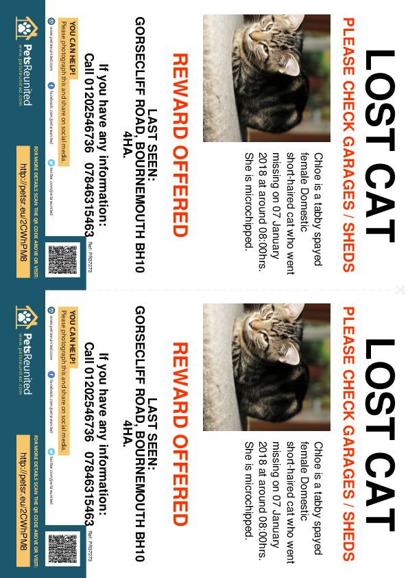 Lost pet flyers - Lost cat: Tabby cat called Chloe
