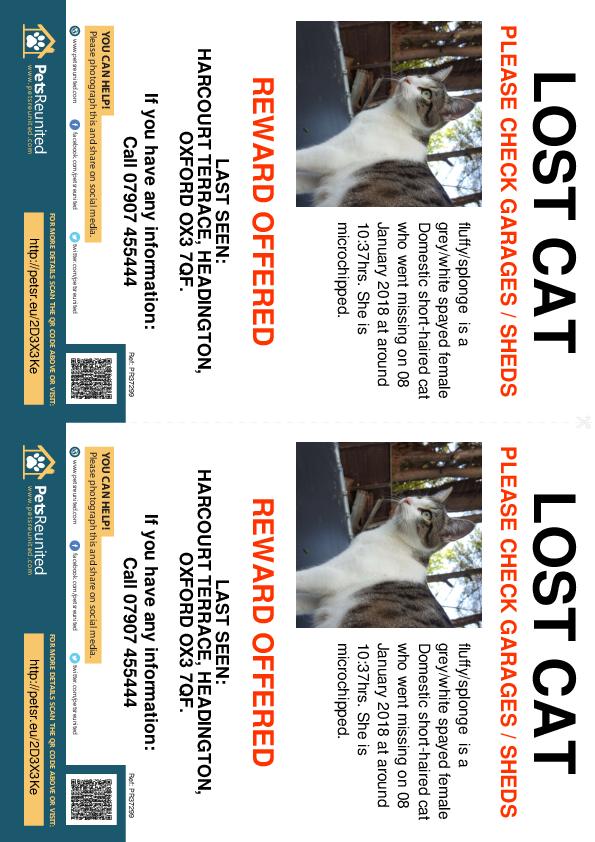 Lost pet flyers - Lost cat: Grey/White cat called fluffy/splonge