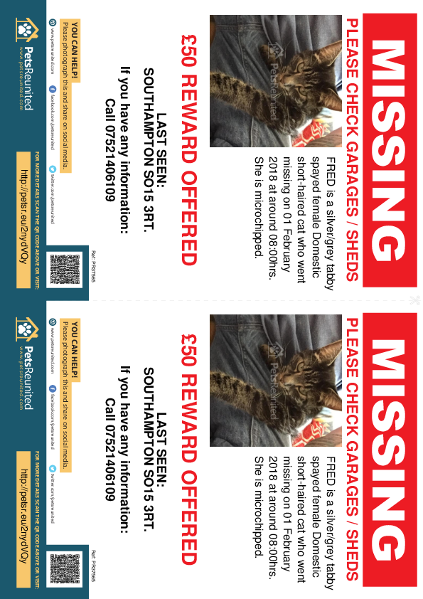 Lost pet flyers - Lost cat: Silver/Grey Tabby cat called FRED
