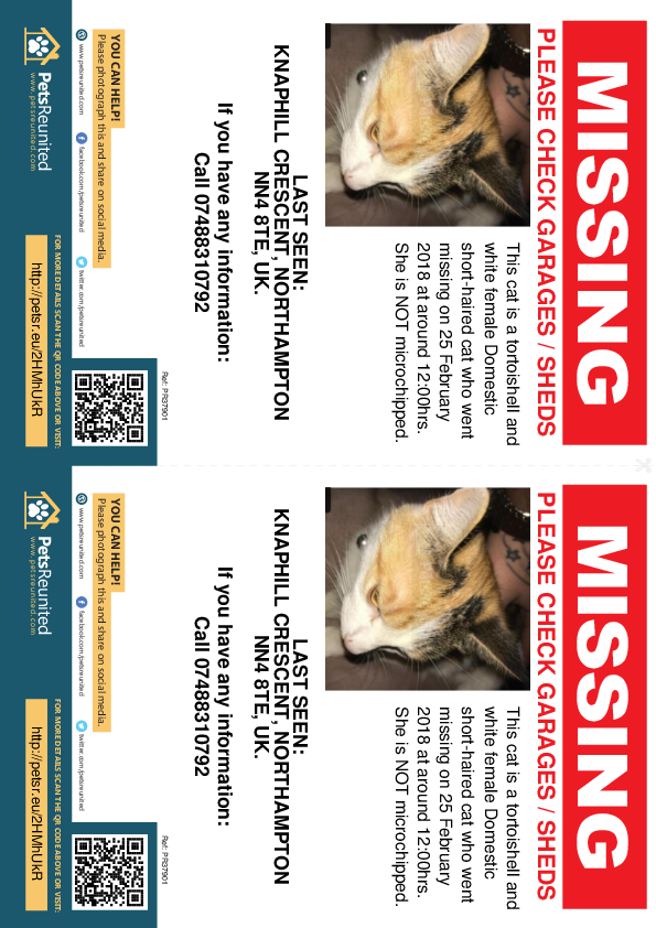 Lost pet flyers - Lost cat: Tortoishell and white cat [name witheld]