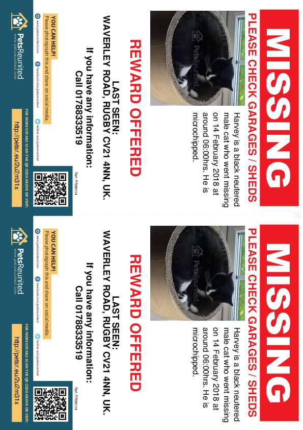 Lost pet flyers - Lost cat: black cat called Harvey
