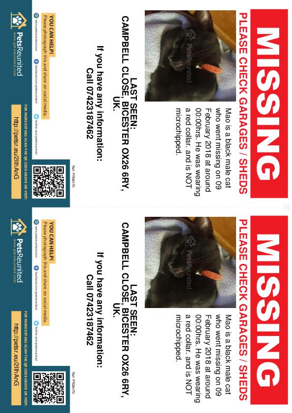 Lost pet flyers - Lost cat: Black cat called Mao