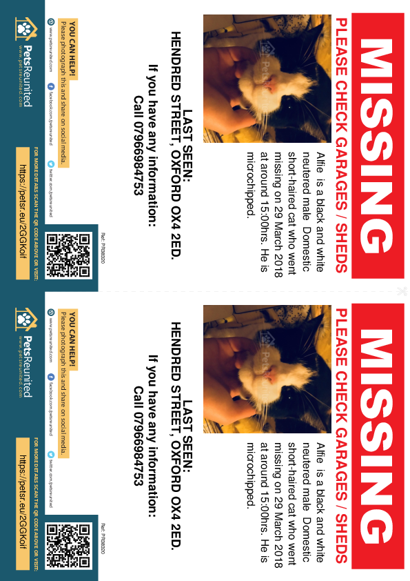 Lost pet flyers - Lost cat: Black and white cat called Alfie