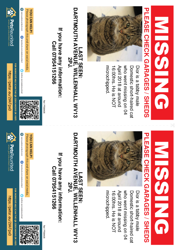 Lost pet flyers - Lost cat: Tabby cat called Dior