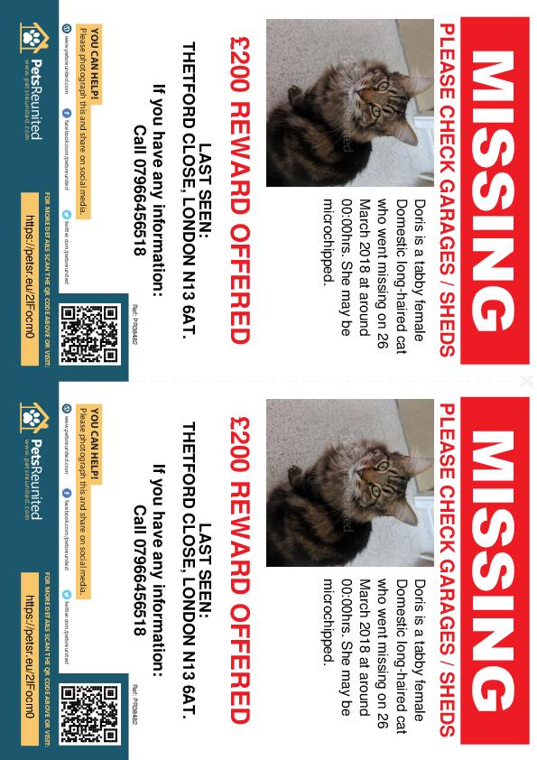 Lost pet flyers - Lost cat: Tabby cat called Doris