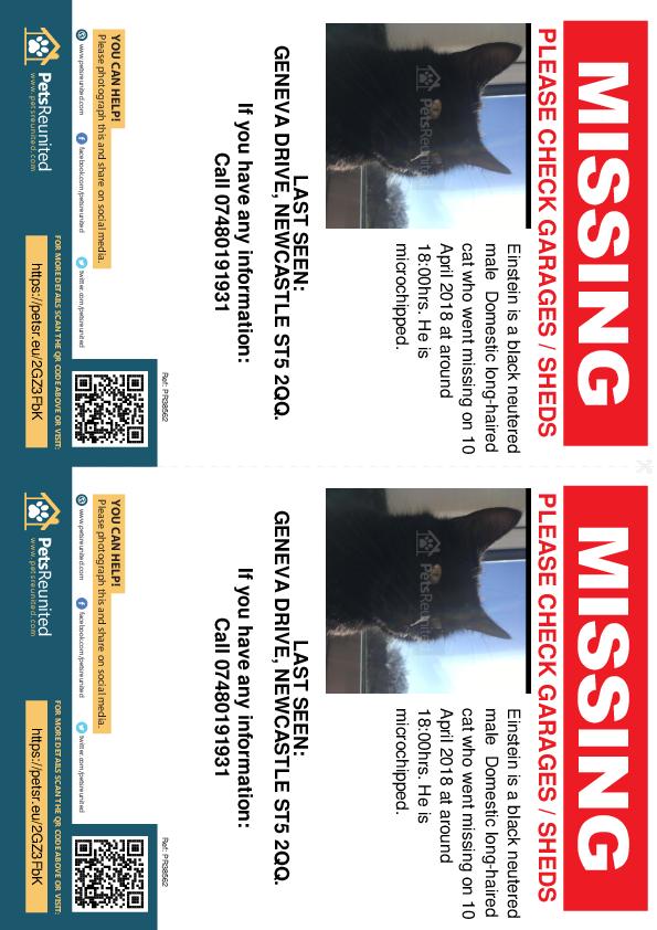Lost pet flyers - Lost cat: Black cat called Einstein