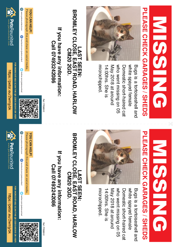 Lost pet flyers - Lost cat: Tortoiseshell and white cat called Bugs