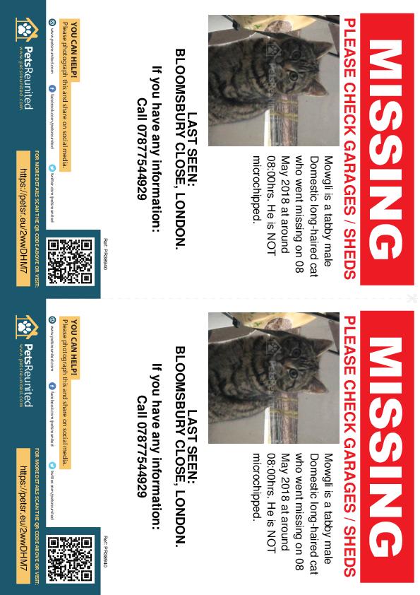 Lost pet flyers - Lost cat: Tabby cat called Mowgli