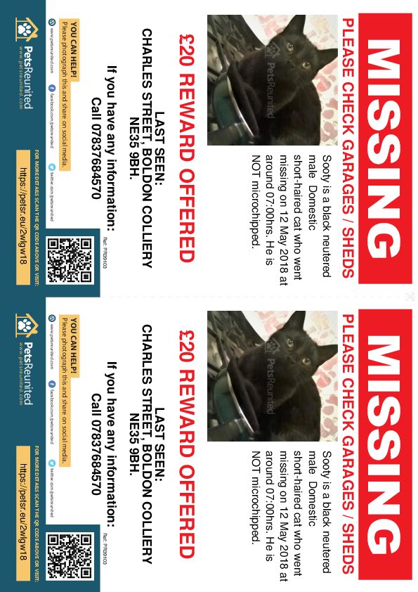 Lost pet flyers - Lost cat: Black cat called Sooty
