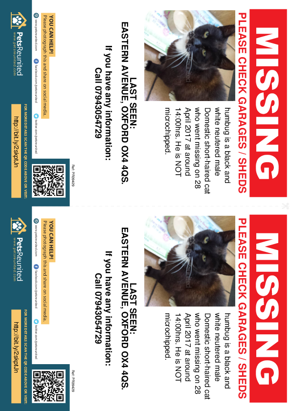 Lost pet flyers - Lost cat: Black and white cat called humbug
