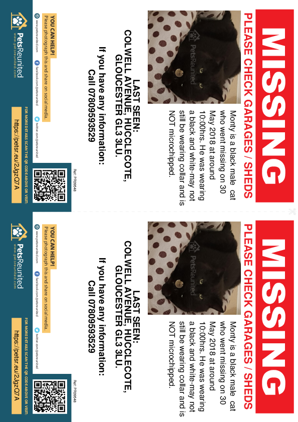 Lost pet flyers - Lost cat: Black cat called Monty