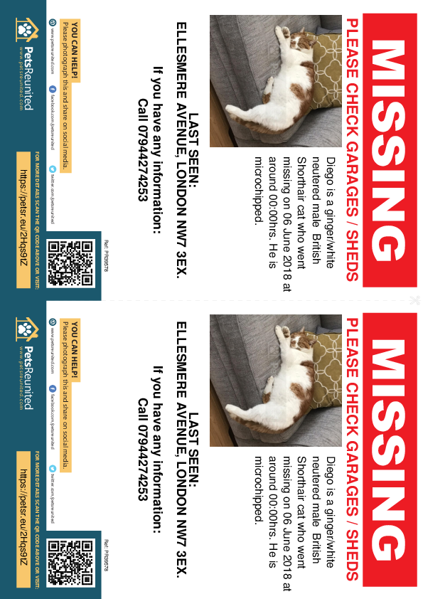 Lost pet flyers - Lost cat: Ginger/white British Shorthair cat called Diego