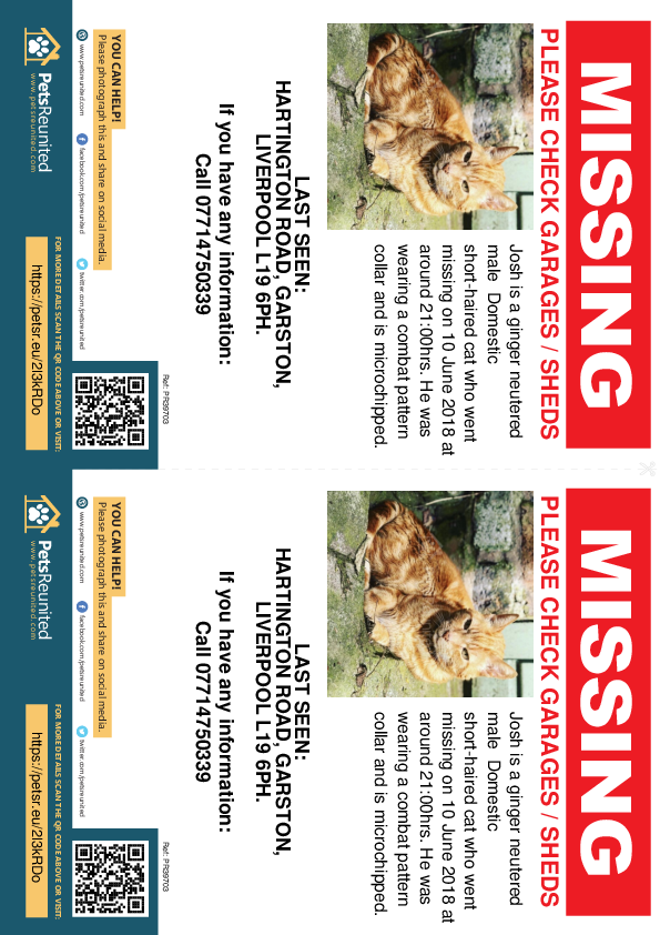 Lost pet flyers - Lost cat: Ginger cat called Josh