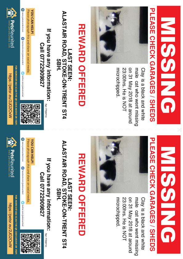 Lost pet flyers - Lost cat: Black and white cat called Clay