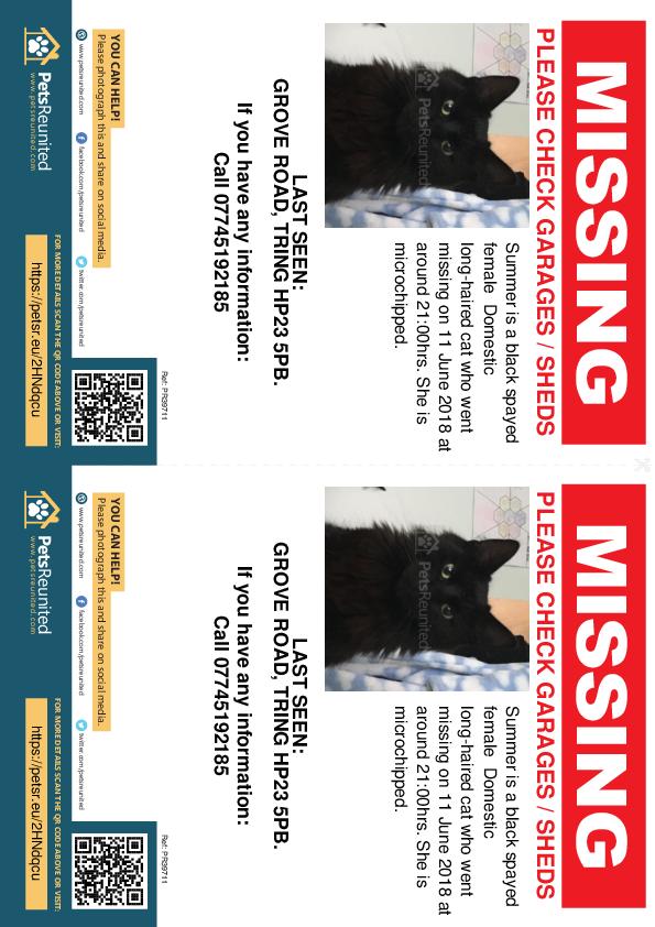 Lost pet flyers - Lost cat: Black cat called Summer