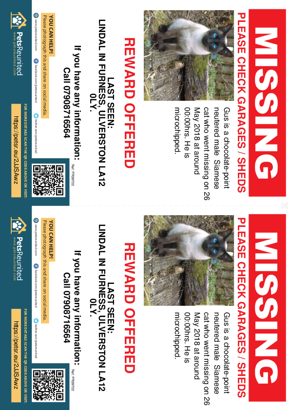 Lost pet flyers - Lost cat: Chocolate-Point Siamese cat called Gus