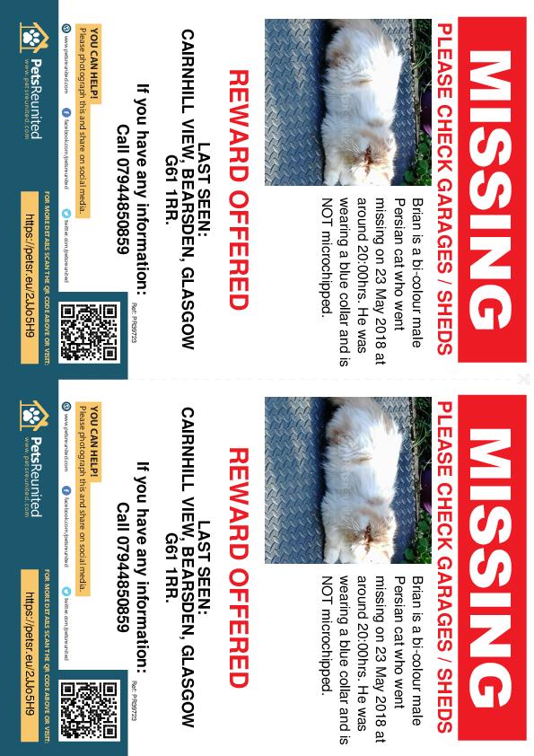 Lost pet flyers - Lost cat: Bi-Colour Persian cat called Brian