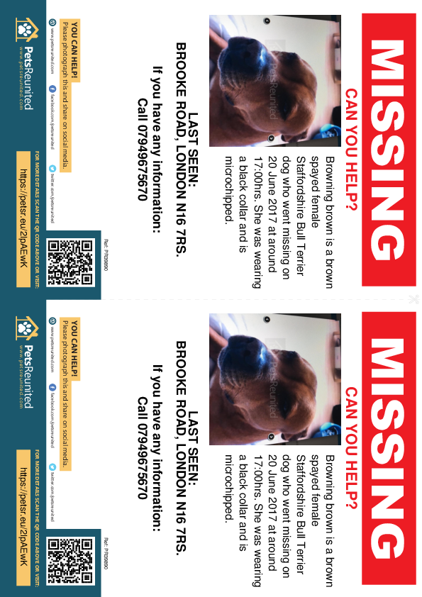 Lost pet flyers - Lost dog: Brown Staffordshire Bull Terrier dog called Browning brown