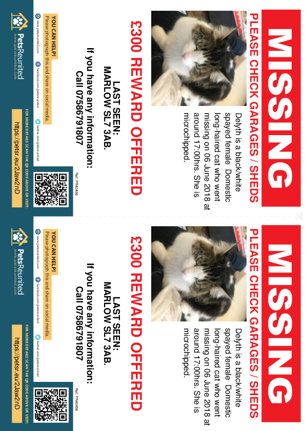 Lost pet flyers - Lost cat: Black/White cat called Delyth