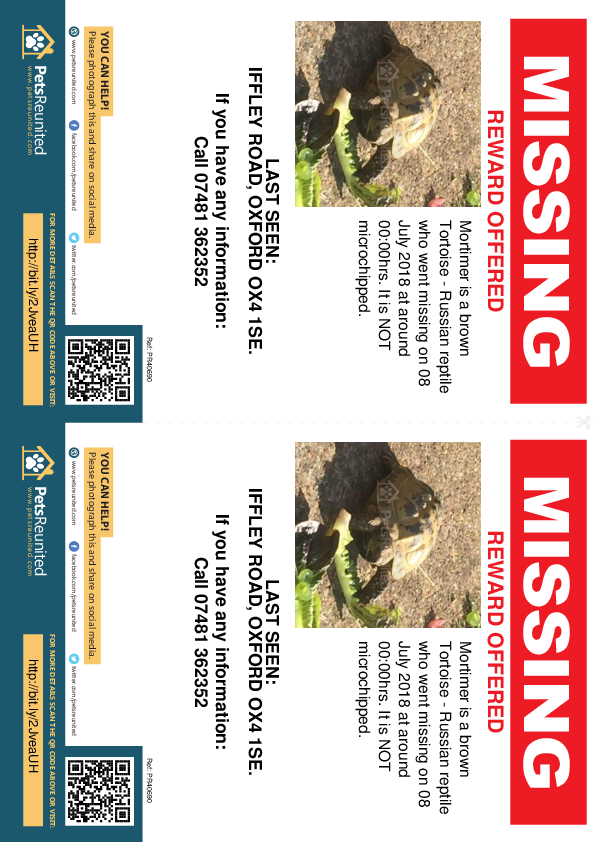 Lost pet flyers - Lost tortoise : brown Russian tortoise  called Mortimer