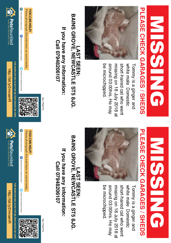 Lost pet flyers - Lost cat: Ginger and white cat called Tommy