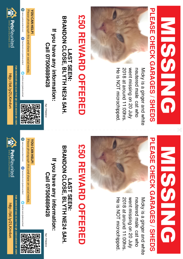 Lost pet flyers - Lost cat: Ginger and white cat called Micky
