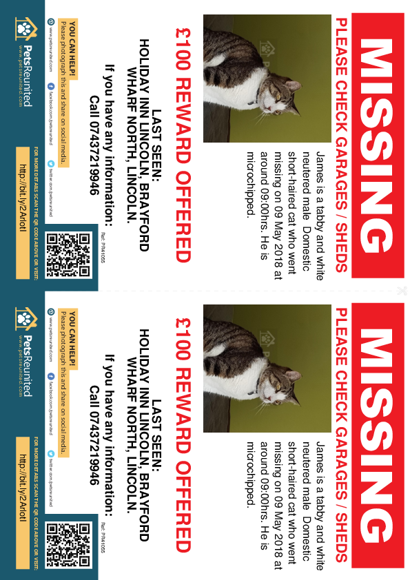 Lost pet flyers - Lost cat: Tabby and white cat called James