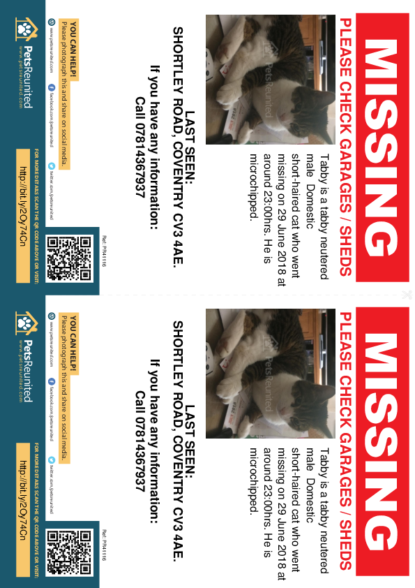 Lost pet flyers - Lost cat: Tabby cat called Tabby