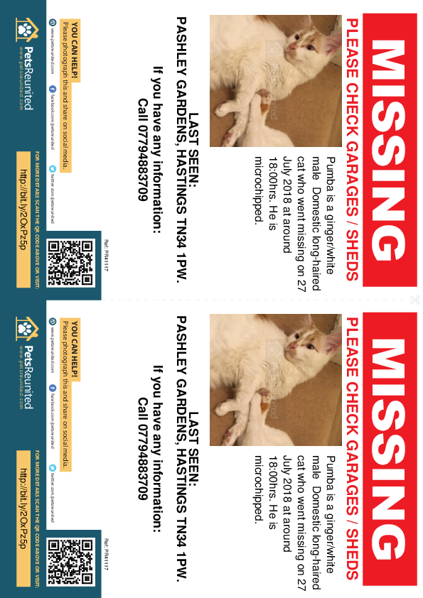 Lost pet flyers - Lost cat: Ginger/White cat called Pumba