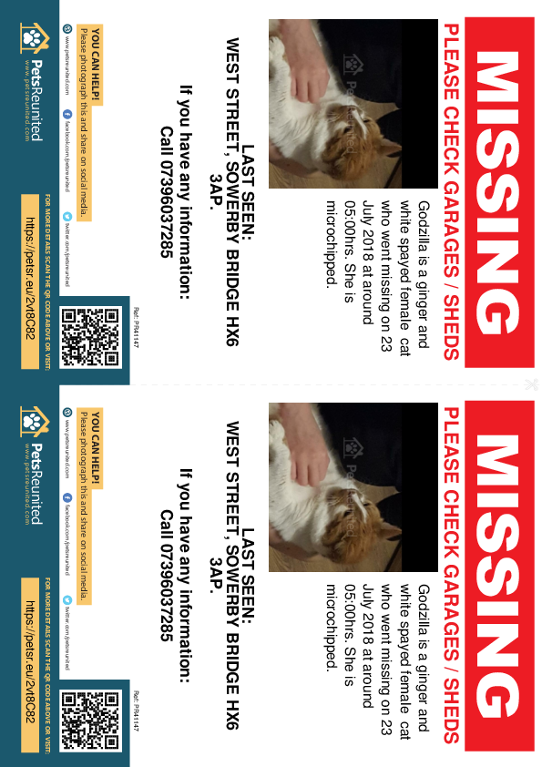 Lost pet flyers - Lost cat: Ginger and white cat called Godzilla