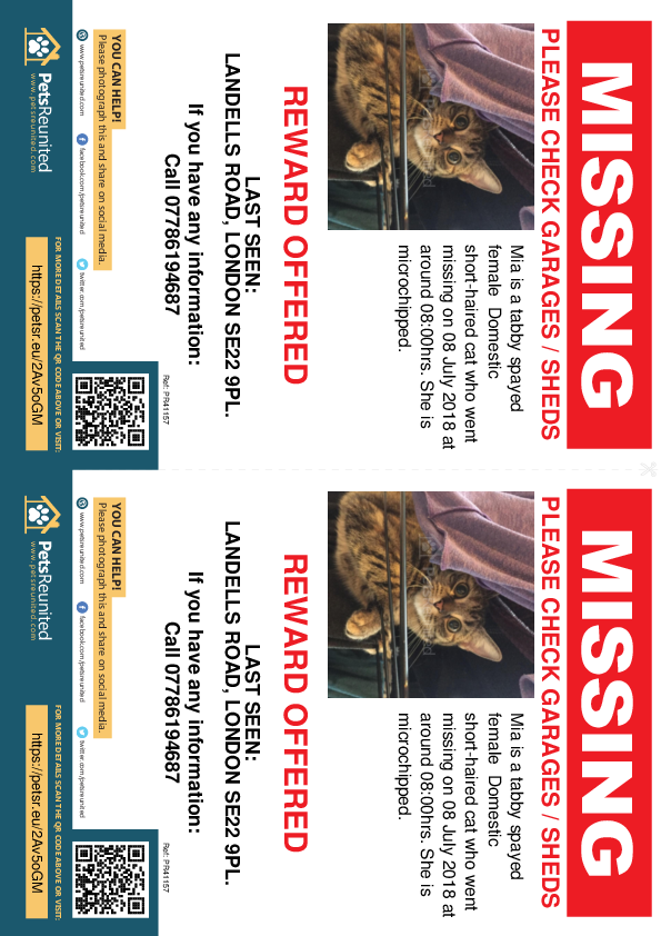 Lost pet flyers - Lost cat: Tabby cat called Mia