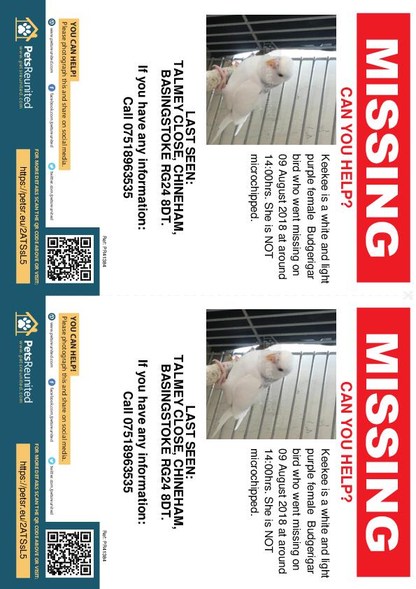 Lost pet flyers - Lost bird: White and light purple Budgerigar bird called Keekee