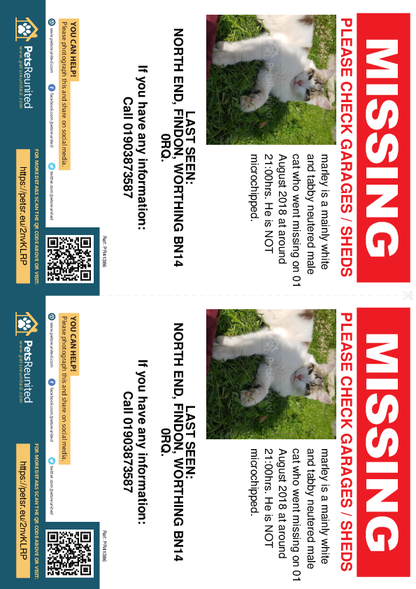 Lost pet flyers - Lost cat: mainly white and tabby cat called marley