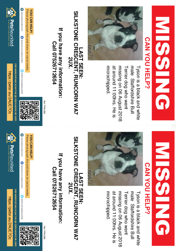 Lost pet flyers - Lost dog: Black and white Staffordshire Bull Terrier dog called Tyson