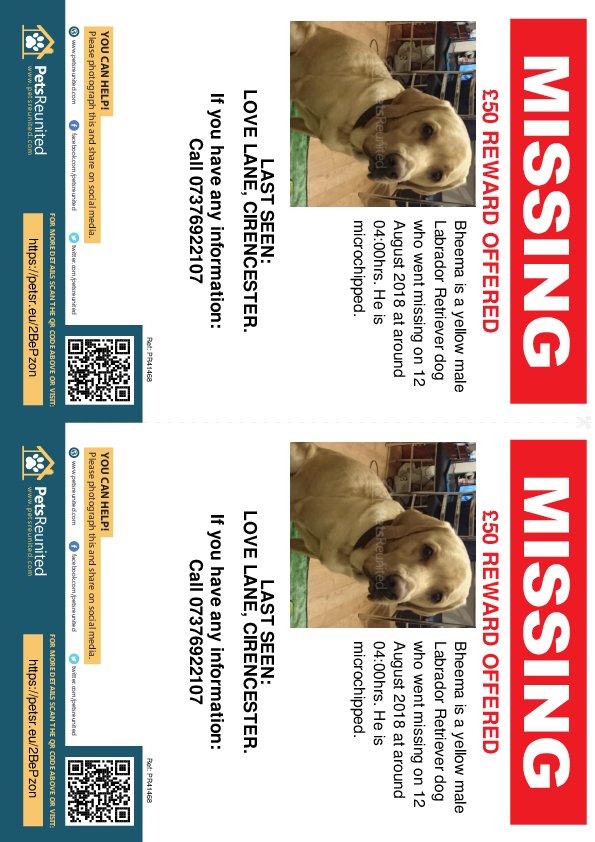 Lost pet flyers - Lost dog: Yellow Labrador Retriever dog called Bheema