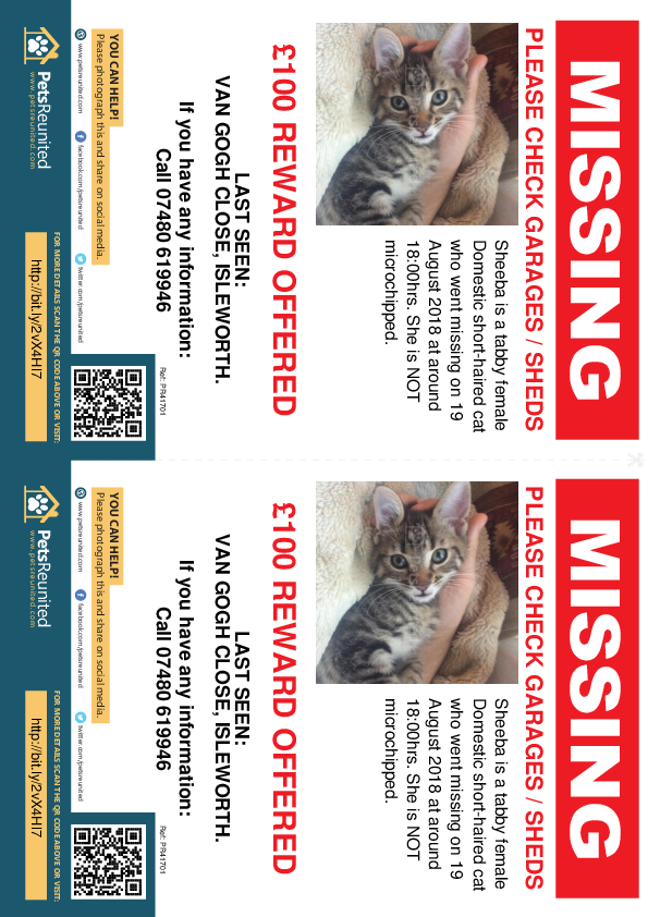 Lost pet flyers - Lost cat: Tabby cat called Sheeba