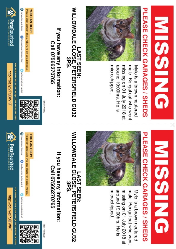 Lost pet flyers - Lost cat: Brown Bengal cat called Mylo