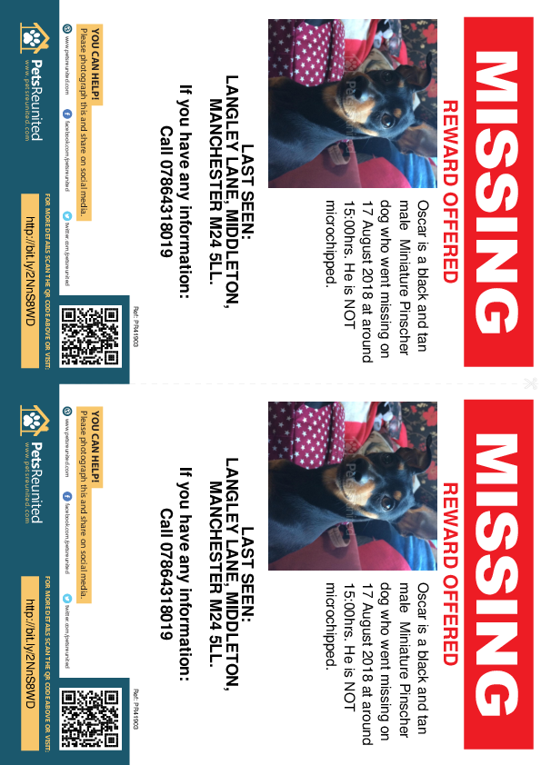 Lost pet flyers - Lost dog: Black and tan Miniature Pinscher dog called Oscar